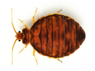 Bed Bugs Control Houston - Protex Pest Control