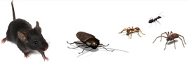 Protex Pest Control stops Houston pests in their tracks