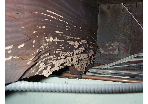 Termite tubing emerging from support - Protex Pest Control Houston