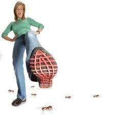 Ant Control in Houston
