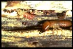 Termite Control - Protex Pest Control Houston